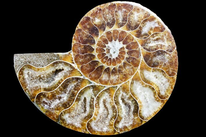 "3.25"" Cut & Polished Ammonite Fossil (Half) - Agate Replaced"
