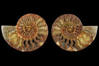 "4.8"" Agate Replaced Ammonite Fossil (Pair) - Madagascar For Sale, #150899"
