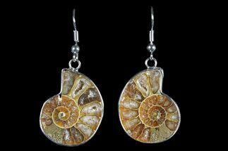Fossil Ammonite Earrings - 110 Million Years Old For Sale, #152006