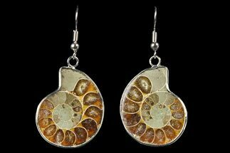 Fossil Ammonite Earrings - 110 Million Years Old For Sale, #152018