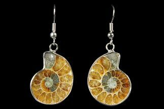 Buy Fossil Ammonite Earrings - 110 Million Years Old - #152020