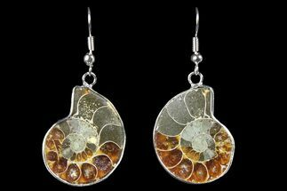 Fossil Ammonite Earrings - 110 Million Years Old For Sale, #152024