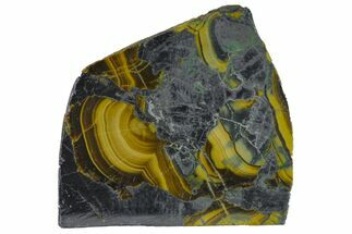 "Buy 1.4"" Polished Schalenblende Slice - Poland - #154588"
