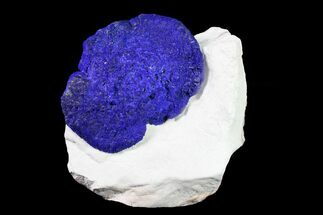 "2.45"" Blue Azurite Sun on Siltstone - Australia For Sale, #155540"
