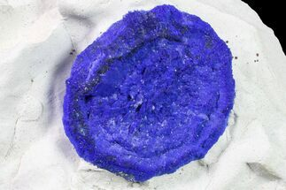 "Buy 1.45"" Vibrant Blue Azurite Sun on Siltstone - Australia - #155548"