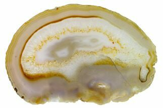 "6.8"" Polished Brazilian Agate Slice For Sale, #156305"