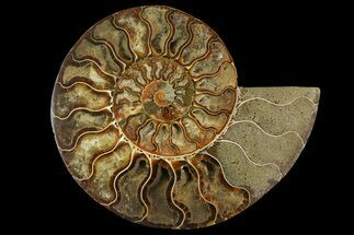 "7.1"" Cut & Polished Ammonite Fossil (Half) - Crystal Chambers For Sale, #158027"
