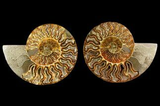"Buy 5.9"" Agate Replaced Ammonite Fossil (Pair) - Crystal Pockets - #158308"