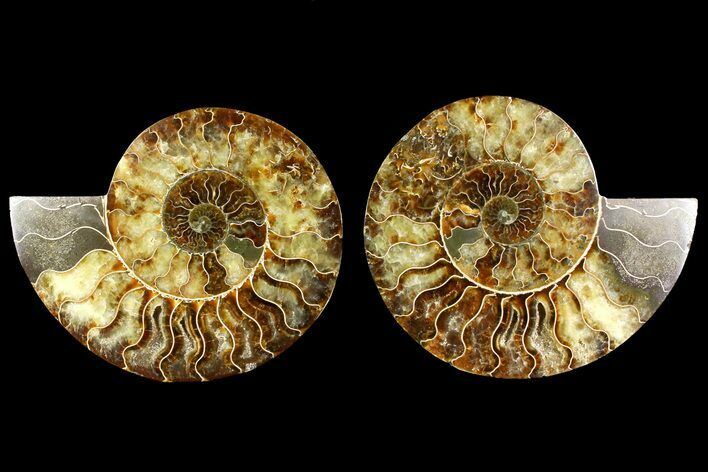"6.15"" Agate Replaced Ammonite Fossil (Pair) - Madagascar"