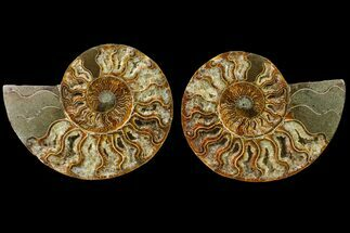 "5.45"" Agate Replaced Ammonite Fossil (Pair) - Madagascar For Sale, #158315"