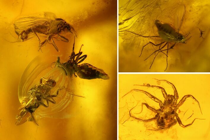 Fossil Flies (Diptera) and a Mite (Acari) in Baltic Amber