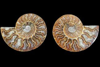 "Buy 3.1"" Agate Replaced Ammonite Fossil (Pair) - Madagascar - #145921"
