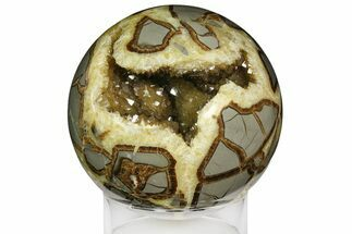 Septarian - Fossils For Sale - #161346