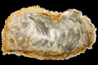 "14.8"" Tropical Hardwood Petrified Wood Dish - Indonesia For Sale, #160979"