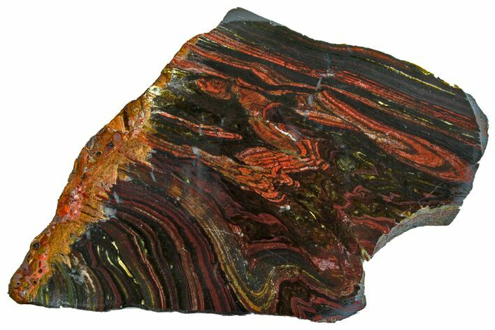 "7.3"" Polished Tiger Iron ""Stromatolite"" Slab - 3.02 Billion Years"