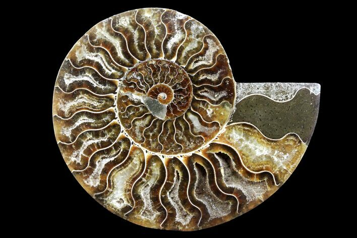 "Bargain, 4.25"" Cut & Polished Ammonite Fossil (Half) - Madagascar"
