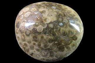 "3.4"" Polished Petoskey Stone (Fossil Coral) - Michigan For Sale, #162059"