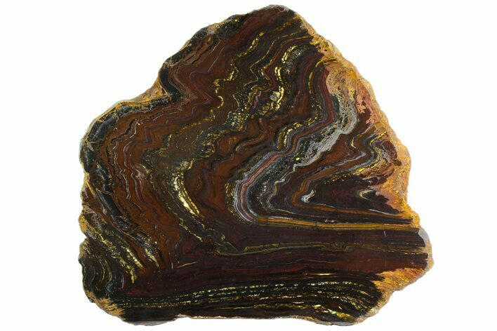 "12.3"" Polished Tiger Iron ""Stromatolite"" Slab - 3.02 Billion Years"