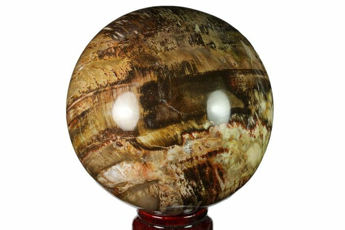 "4.1"" Colorful Petrified Wood Sphere - Madagascar"