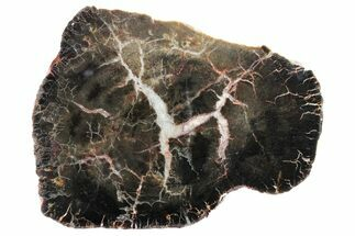 "5.3"" Triassic Petrified Wood (Conifer) Slab - Utah For Sale, #163658"
