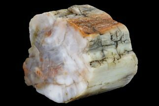 "4.5"" Polished, Petrified Wood (Araucarioxylon) - Arizona For Sale, #165974"