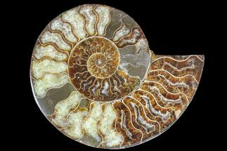 "Buy 6.5"" Cut & Polished Ammonite Fossil (Half) - Madagascar - #166909"