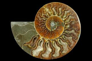 "Buy 4.1"" Cut & Polished Ammonite Fossil (Half) - Madagascar - #166825"