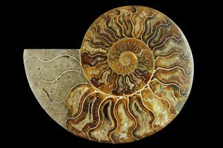 "5.4"" Cut & Polished Ammonite Fossil (Half) - Madagascar For Sale, #166889"