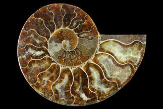 "Buy 4.1"" Cut & Polished Ammonite Fossil (Half) - Madagascar - #166801"