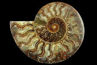 "Buy 4.9"" Cut & Polished Ammonite Fossil (Half) - Madagascar - #166831"