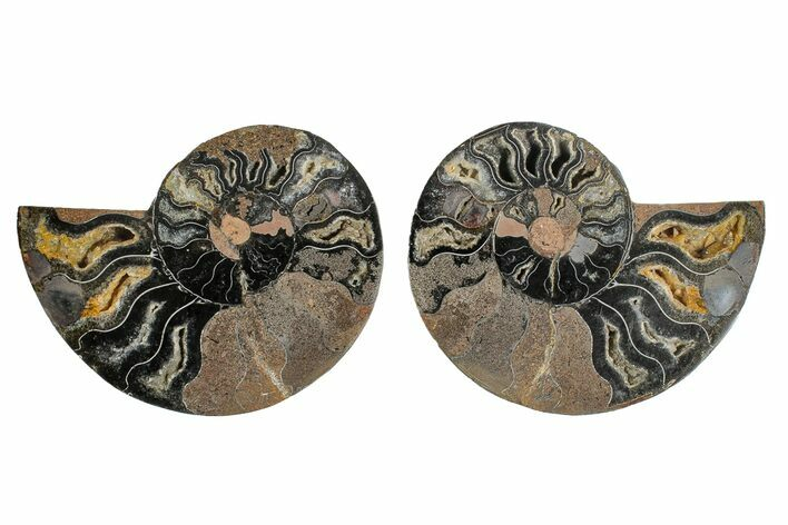 "3.2"" Cut/Polished Ammonite Fossil (Pair) - Unusual Black Color"