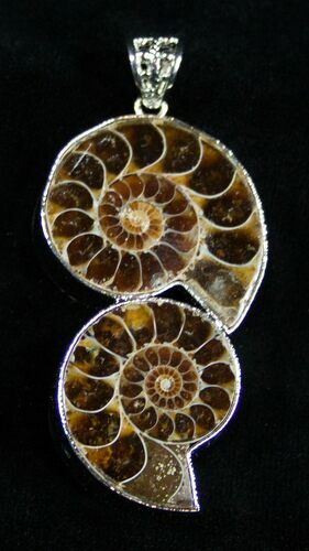 Double Ammonite Pendant