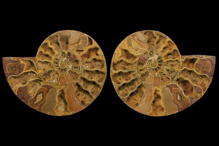 "13.7"" Orange, Crystal Filled, Cut Ammonite Fossil (Pair) - Jurassic"