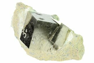 Pyrite - Fossils For Sale - #168516