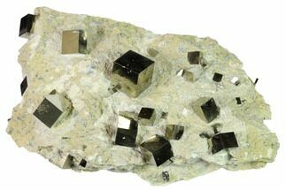 Pyrite - Fossils For Sale - #168549