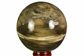 "3"" Polished Petrified Wood Sphere - Madagascar For Sale, #169145"