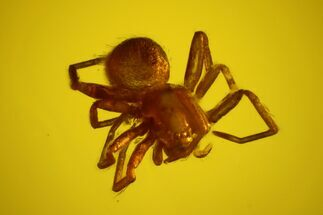 Buy Fossil Spider (Araneae) in Baltic Amber - #170041