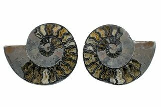 "Buy 7.6"" Cut/Polished Ammonite Fossil (Pair) - Unusual Black Color - #169702"