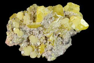 "Buy 1.8"" Yellow Wulfenite and Botryoidal Mimetite - La Morita Mine, Mexico - #170299"