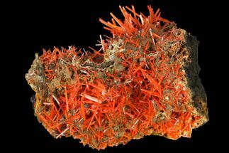 "1.55"" Bright Orange Crocoite Crystal Cluster - Tasmania For Sale, #171650"