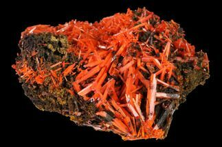 Crocoite - Fossils For Sale - #171672