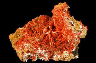 Crocoite - Fossils For Sale - #171678