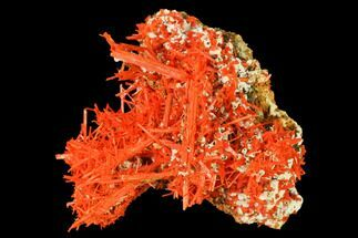 Crocoite  - Fossils For Sale - #171681
