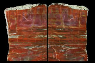 "Buy 6.4"" Tall, Arizona Petrified Wood Bookends - Red, Orange & Purple - #171988"