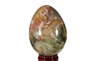 "Buy 4.9"" Colorful, Polished Petrified Wood Egg - Madagascar - #172525"