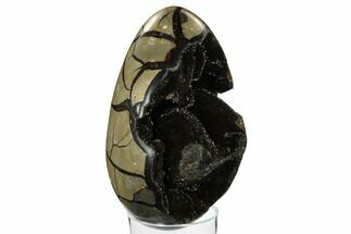 "7.1"" Septarian ""Dragon Egg"" Geode - Black Crystals For Sale, #172814"