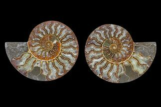 "Buy 4.9"" Agate Replaced Ammonite Fossil (Pair) - Madagascar - #166864"