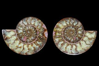 "5.9"" Agate Replaced Ammonite Fossil (Pair) - Madagascar For Sale, #169445"