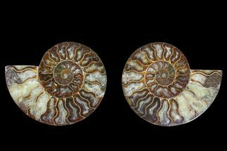 "Buy 5.2"" Agate Replaced Ammonite Fossil (Pair) - Madagascar - #169483"