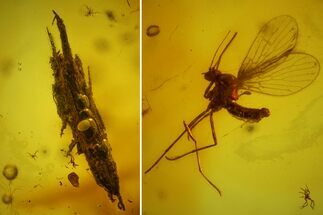 Fossil Fly (Diptera), Mite (Acari) & Wood Splinter in Baltic Amber For Sale, #173642